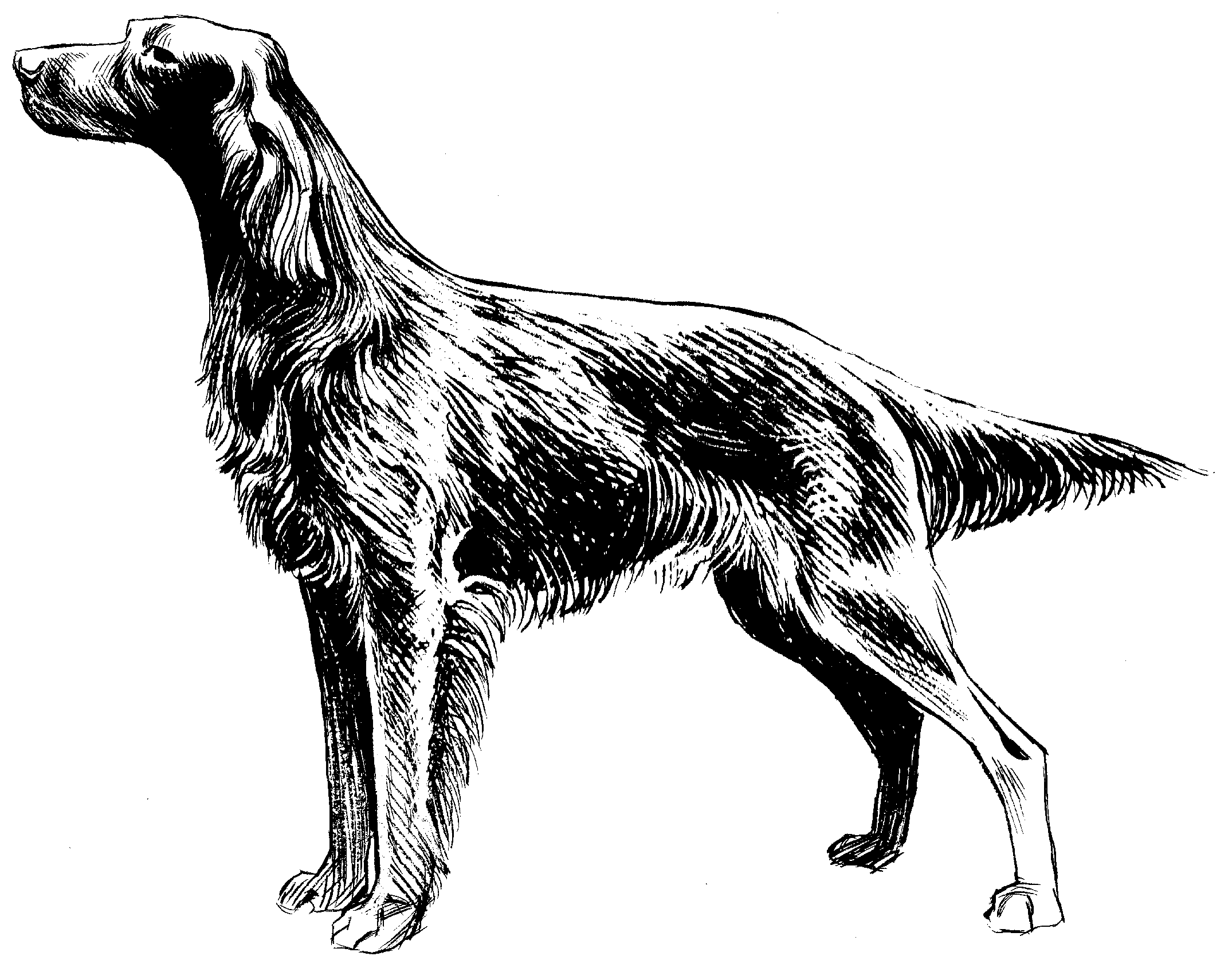 Red Setter svg #11, Download drawings