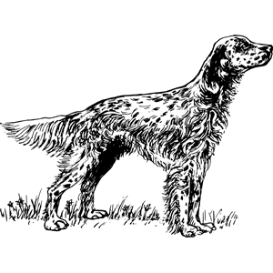 Red Setter svg #4, Download drawings