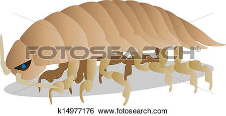 Isopod clipart #20, Download drawings