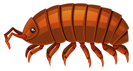 Isopod clipart #4, Download drawings