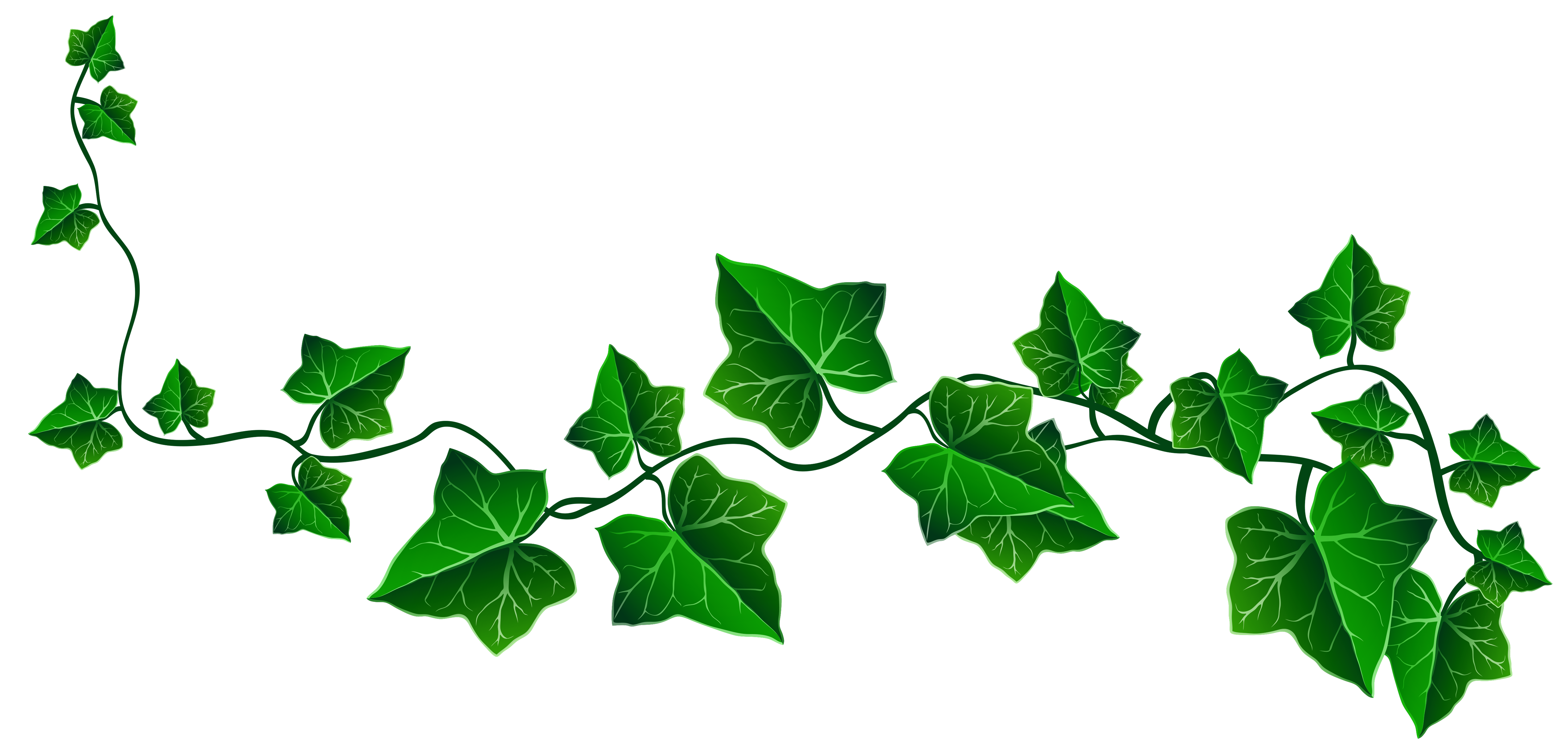 Ivy clipart #3, Download drawings
