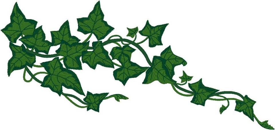 Ivy clipart #6, Download drawings
