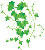 Ivy clipart #20, Download drawings