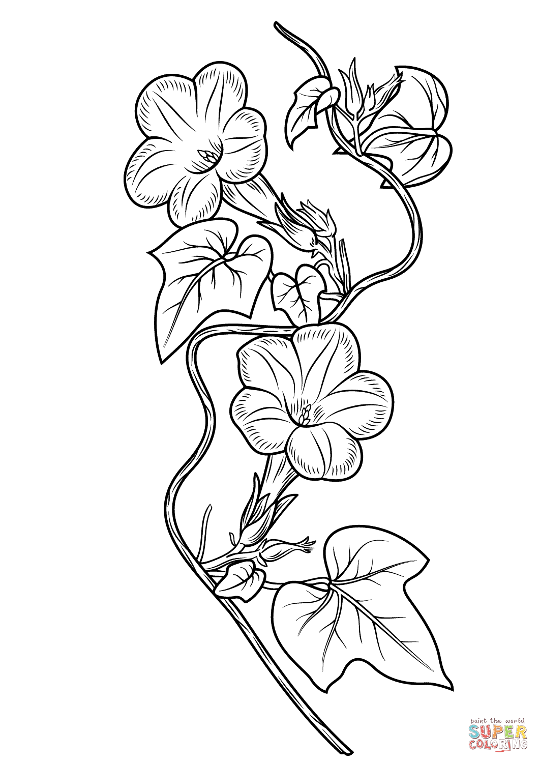 Ivy Coloring Download Ivy Coloring For Free 2019