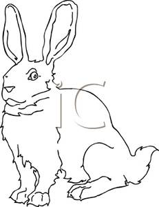 Jack Rabbit clipart #10, Download drawings