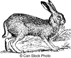 Jack Rabbit clipart #6, Download drawings