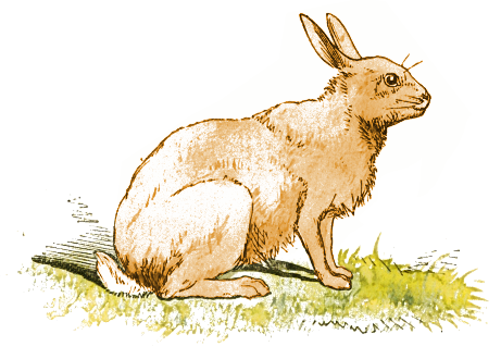 Jack Rabbit clipart #20, Download drawings
