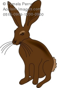Jack Rabbit clipart #8, Download drawings