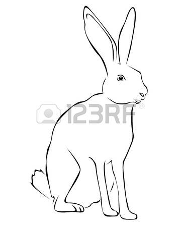 Jack Rabbit coloring Download