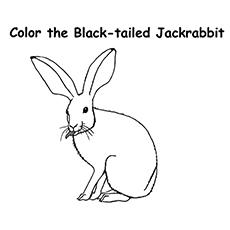 Jack rabbit coloring download jack rabbit coloring for Jack rabbit coloring page