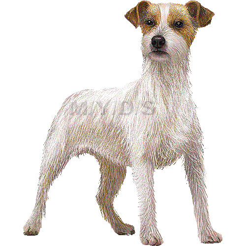 Jack Russell Terrier clipart #19, Download drawings