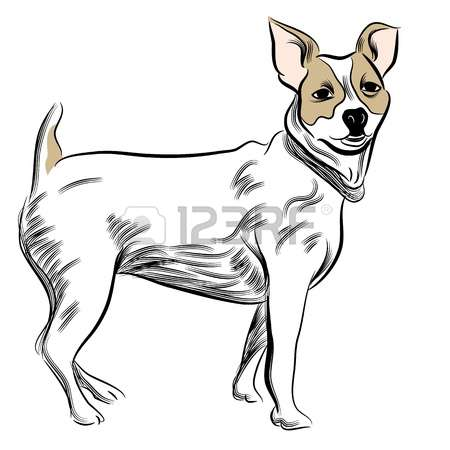 Jack Russell Terrier clipart #15, Download drawings