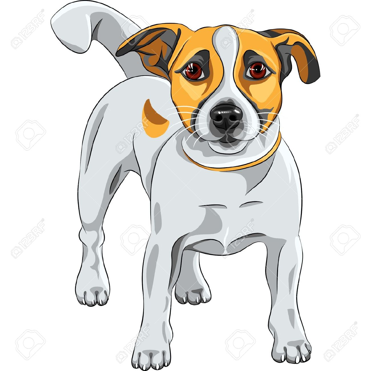 Jack Russell Terrier clipart #6, Download drawings