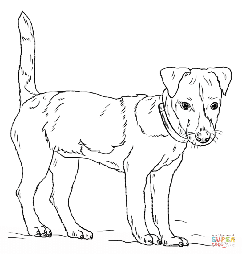 boston terrier coloring page - terrier coloring download terrier coloring