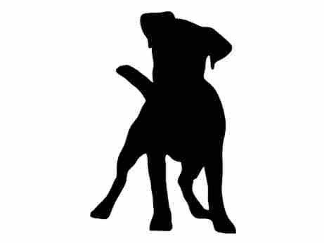 Jack Russell Terrier svg #16, Download drawings