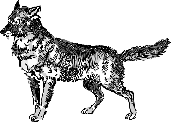 Jackal clipart #11, Download drawings