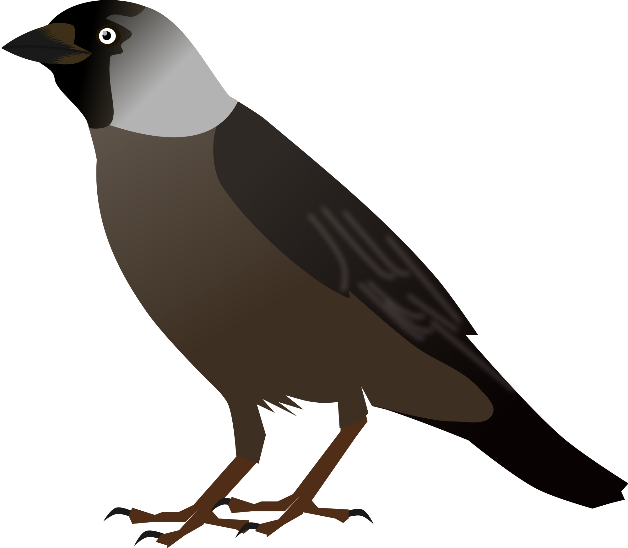 Jackdaw clipart #3, Download drawings