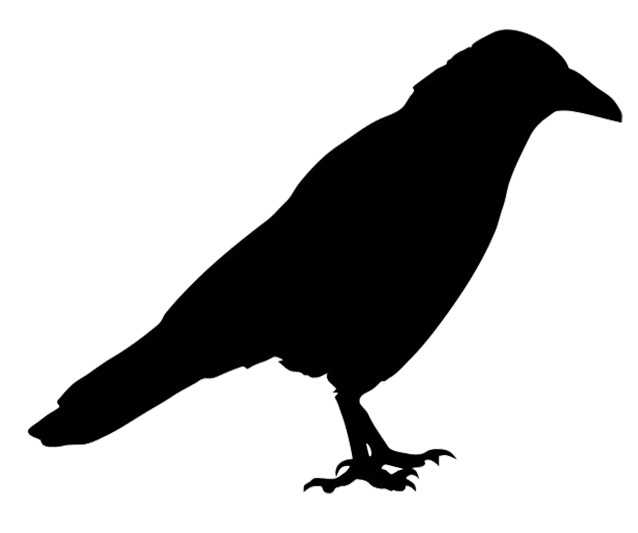 Jackdaw clipart #2, Download drawings
