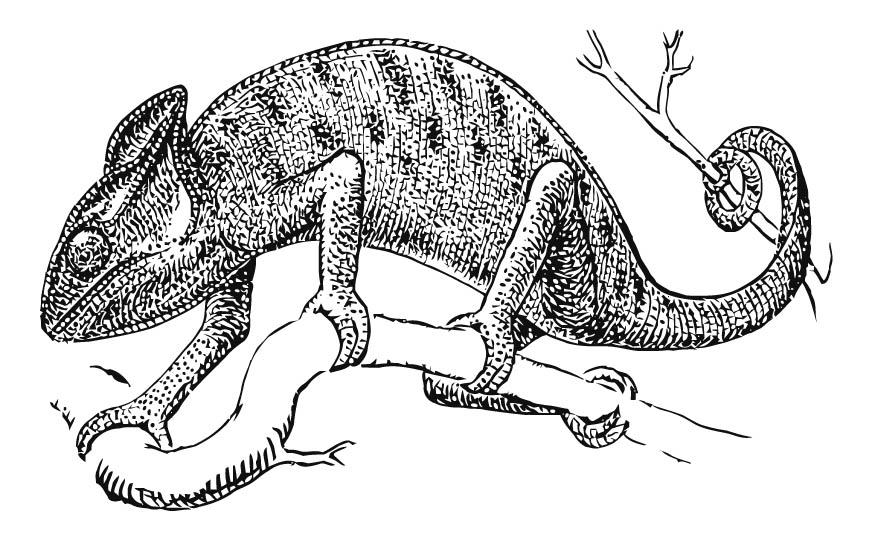 jackson's chameleon coloring download jackson's chameleon