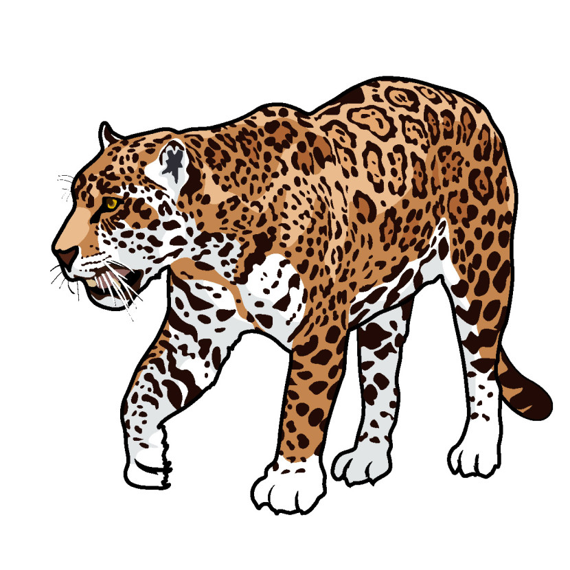 Jaguar clipart #20, Download drawings