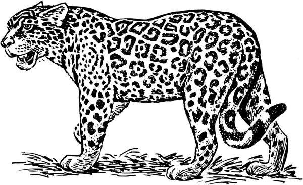 Jaguar svg #19, Download drawings