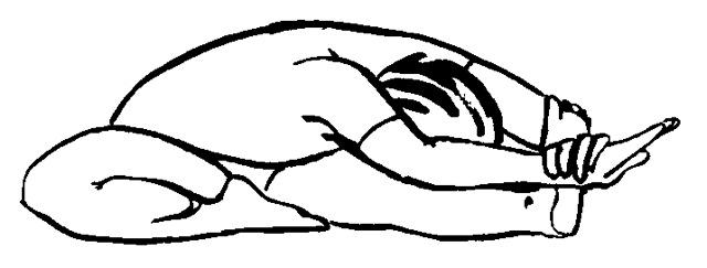 Janu coloring #8, Download drawings