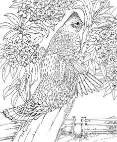 Janu coloring #19, Download drawings