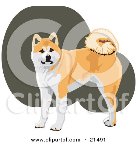 Japanese Akita clipart #3, Download drawings