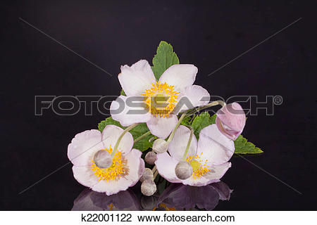 Japanese Anemone clipart #10, Download drawings