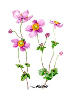 Japanese Anemone clipart #3, Download drawings