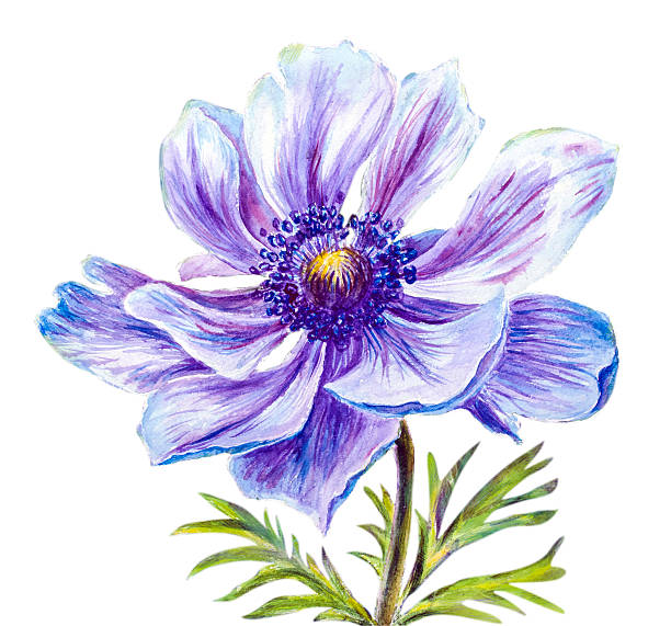 Japanese Anemone clipart #2, Download drawings