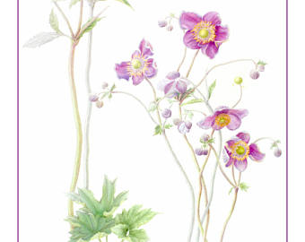 Japanese Anemone clipart #15, Download drawings