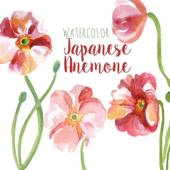 Japanese Anemone clipart #11, Download drawings