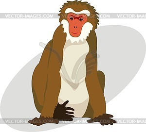 Macaque clipart #1, Download drawings