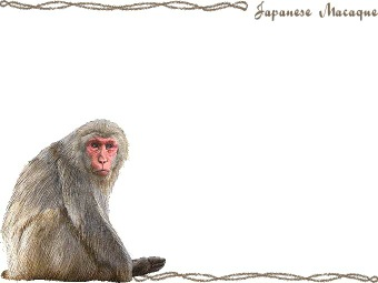 Japanese Macaque clipart #2, Download drawings