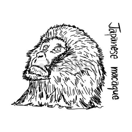 Japanese Macaque clipart #4, Download drawings