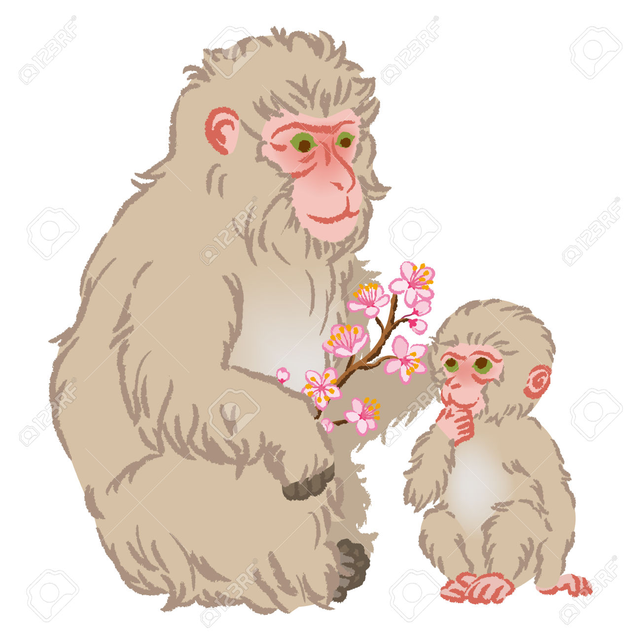 Japanese Macaque clipart #12, Download drawings