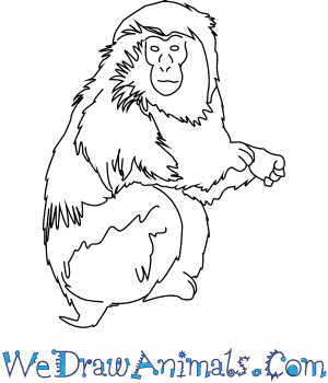 Japanese Macaque coloring #18, Download drawings
