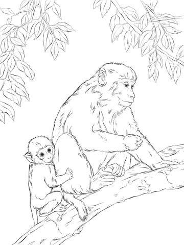Japanese Macaque coloring #6, Download drawings