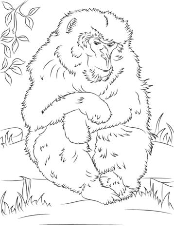 Japanese Macaque coloring #17, Download drawings