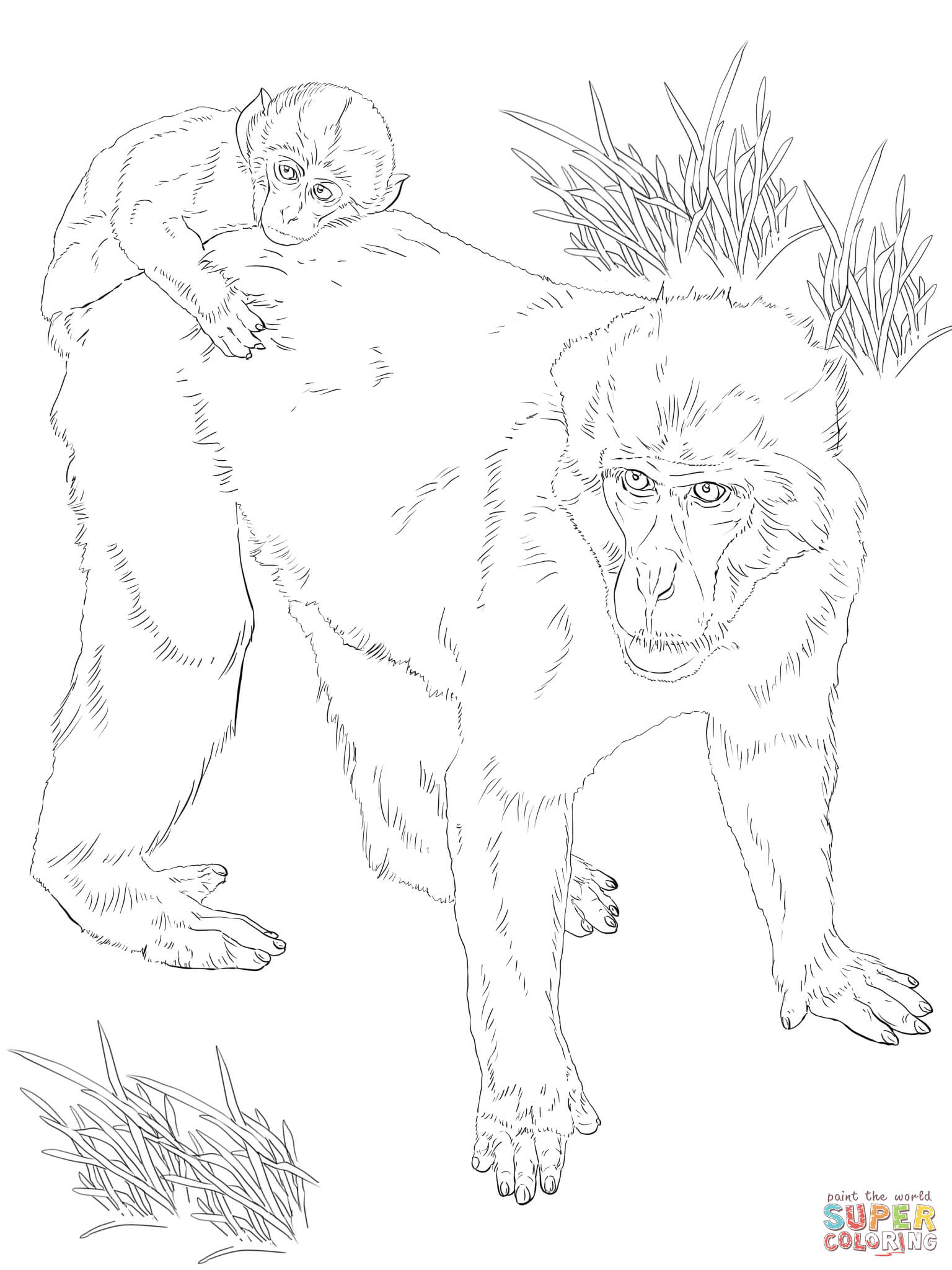 Japanese Macaque coloring #2, Download drawings