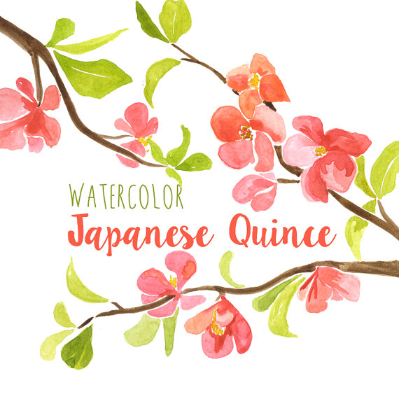 Japanese Quince clipart #4, Download drawings