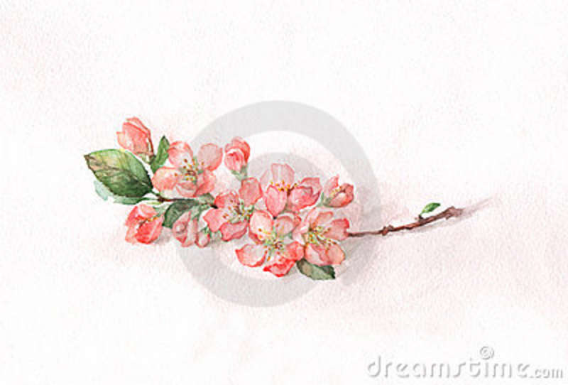 Japanese Quince clipart #16, Download drawings