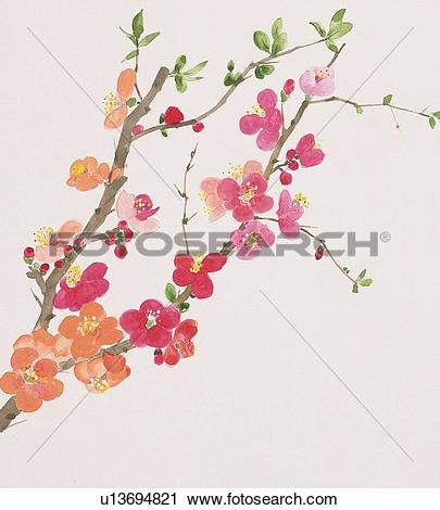 Japanese Quince clipart #14, Download drawings