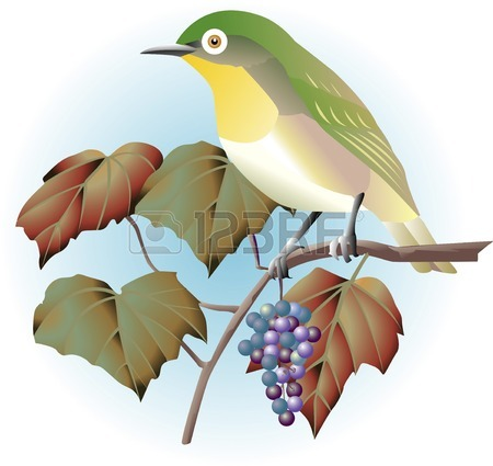 Japanese White-eye clipart #17, Download drawings