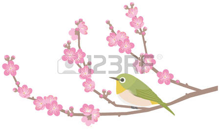 Japanese White-eye clipart #10, Download drawings
