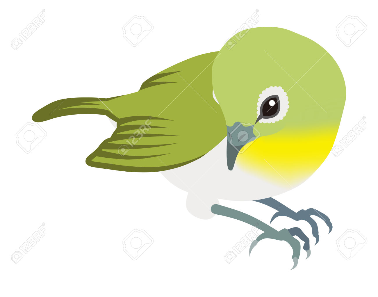Japanese White-eye clipart #8, Download drawings