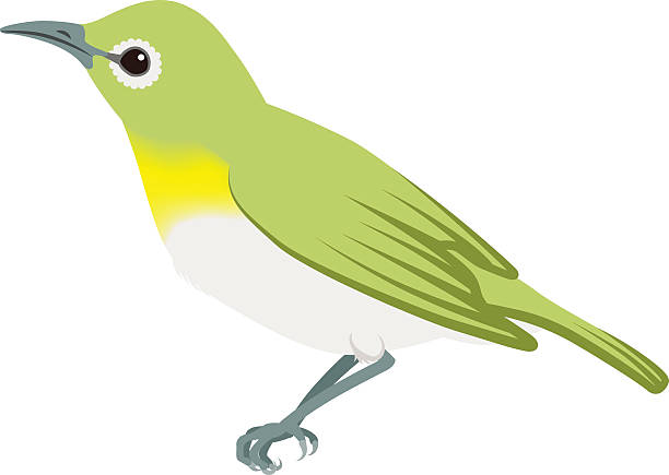 Japanese White-eye clipart #14, Download drawings