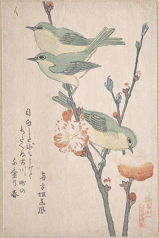 Japanese White-eye coloring #7, Download drawings