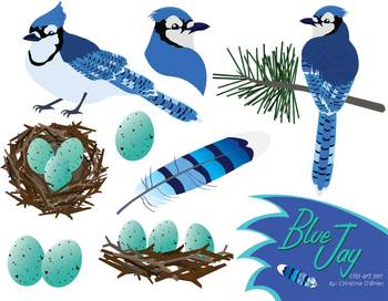 Jay clipart #18, Download drawings